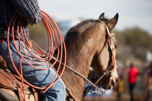 Horse Feeds at Berend Bros.