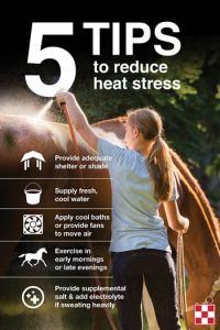 How to Keep Your Horses Cool in Hot Weather. Read our tips for keeping your horses cool and safe in the summer heat.