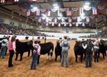 2021-2022 Texas Livestock Shows are set. Be ready for the ring with the help of Berend Bros.