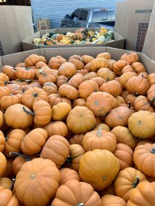 Pick out your pumpkins at Berend Bros.!Bring the fun of fall to your home and garden with our wide selection of autumn harvest produce.